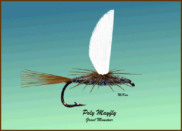Poly Mayfly - Grant Mounteer